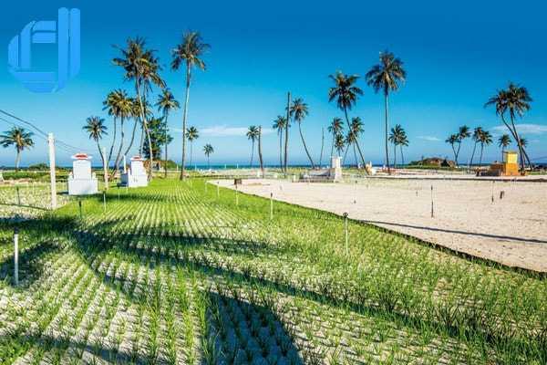 Ăn gì khi đi du lịch đảo Lý Sơn Quảng Ngãi nên đọc nhất tuần qua