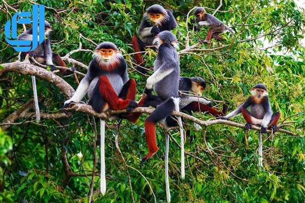 Bán đảo Sơn Trà điểm du lịch sơn thủy kỳ tú Đà Nẵng | D2tour