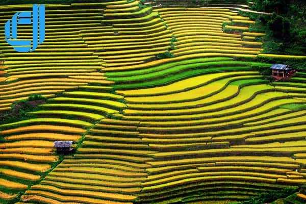 Cánh đồng Mường Thanh, cánh đồng rộng lớn nhất cung Tây Bắc