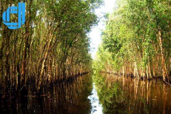 Khám phá rừng tràm U Minh Hạ, điểm đến hấp dẫn của Cà Mau