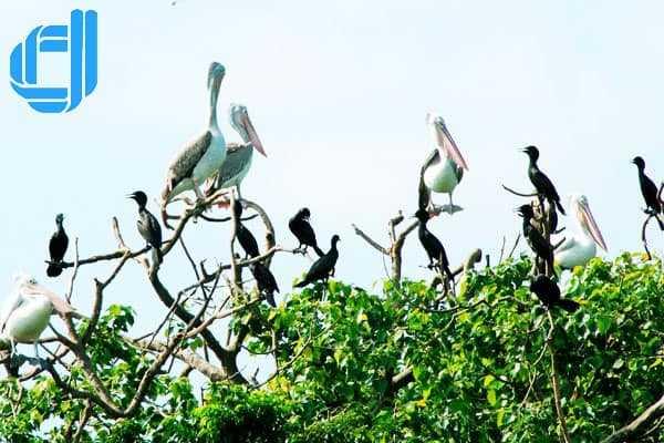 Sân chim Bạc Liêu thiên đường của loài lông vũ