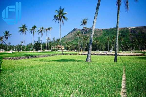 Tour Lý Sơn khám phá thiên đường tỏi