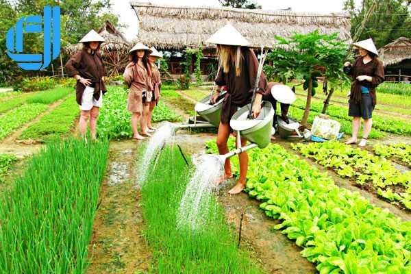 Thăm - trồng - ăn ngon với rau làng Trà Quế