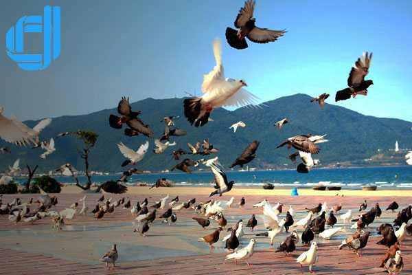 Những điều cần biết về phương tiện khi đến dã ngoại Đà Nẵng