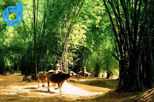 Túy Loan vẻ đẹp làng quê Việt