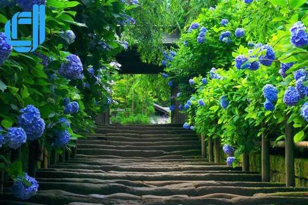 Vườn hoa tình yêu Đà Lạt điểm đến du lịch lý tưởng bạn cần biết